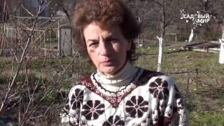 Защита плодовых от монилиального ожога видео