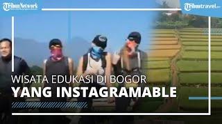 Kampung Tematik Mulyaharja di Bogor, Tawarkan Tempat Agro Eduwisata di Persawahan yang Instagramable