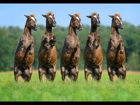 Online Horse Training Overview | EasyHorseTraining.com - YouTube
