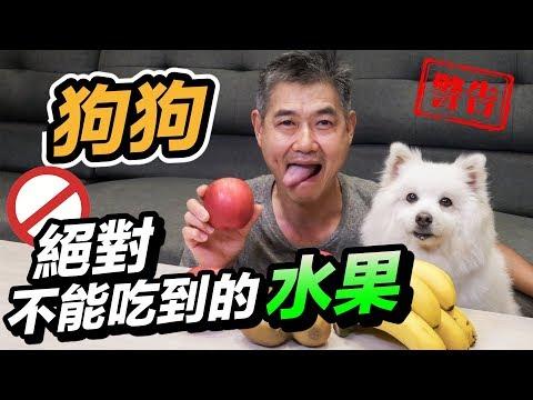 吃哪些水果才能讓狗狗們吸取營養與健康