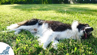 The 5 Signs Of Heatstroke In Dogs That Dog Owners MUST Know