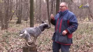 Зоопсихология, Как правильно давать корм собаке во время дрессировки