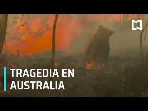 Video: Devastadores incendios en Australia