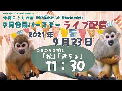 動物イベント★ライブ配信【9月合同バースデー*コモンリスザル】CELEBRATING September BIRTHDAY! ~Common squirrel monkey