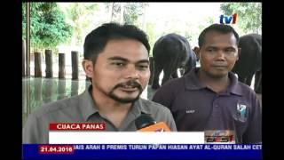 CUACA PANAS - GAJAH LEBIH KERAP DIMANDIKAN [21 APR 2016]
