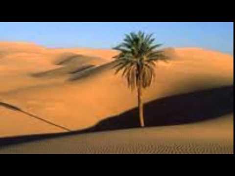 Música Como a Palmeira