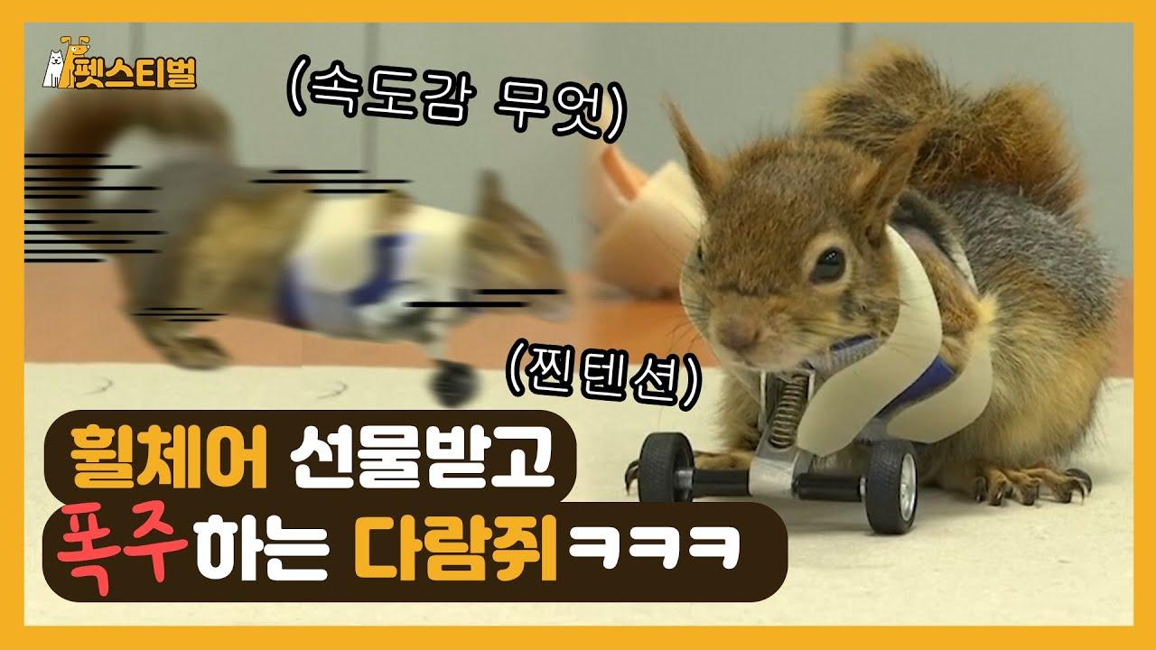 앞다리 잃은 다람쥐가 새 다리 얻고 보인 반응