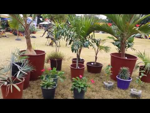 Garden Show: Green is life