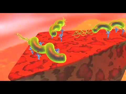 Féreg parazita tabletták