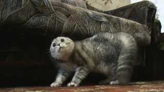 Смотреть онлайн Говорящий кот Тихон