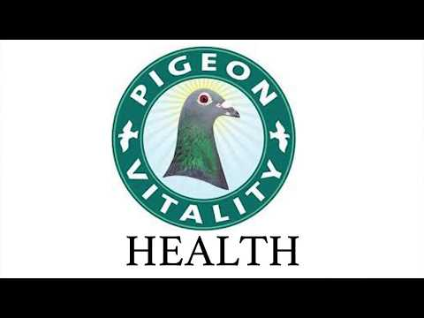 , title : 'Pigeons Health | Best 8 Natural products - Presented by Frode Brakstad