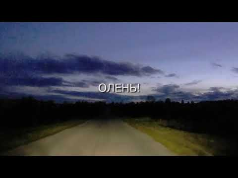 Фото видеогид Нижегородский олень!