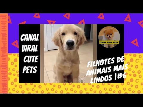VIRAL CUTE PETS   ANIMAIS MAIS FOFOS DO MUNDO #6