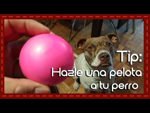 Tip: Hazle una pelota a tu perro