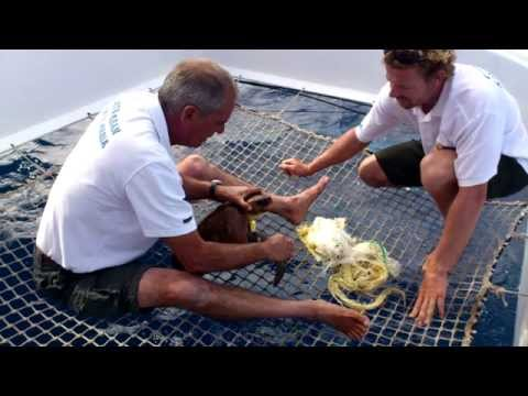 RESCUE OF TURTLE