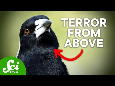 7 of Australia's Most Terrifying Inhabitants