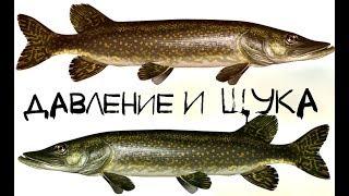 прогноз клева рыбы на три дня