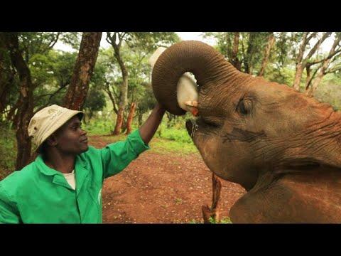 Kenyan sanctuary raises orphaned baby elephants