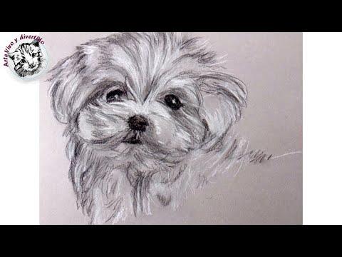 Como dibujar un perrito con carboncillo y lapiz carbon - Como pintarse bien ...