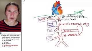 Circulation 5- Hepatic portal system