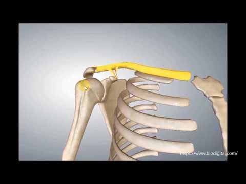 Knochennekrose der Kniebehandlung
