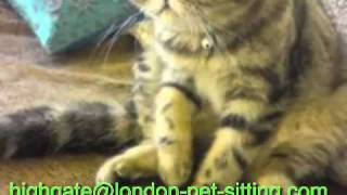 preview picture of video 'Dog  Walker Highgate | Highgate Pet Sitting | Archway Cat Sitting'