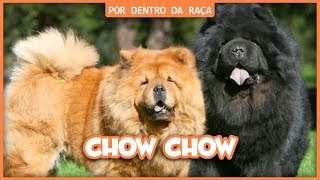 Chow Chow - Por Dentro Da Raça