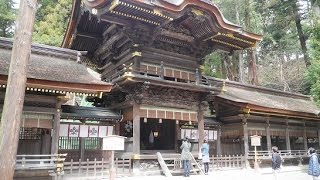 「下社春宮」長野県諏訪大社観光パワーあふれる結びの杉!2~7月しか神様いません