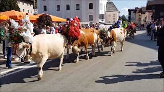 Almabtrieb Brixen Im Thale 23 September 2017