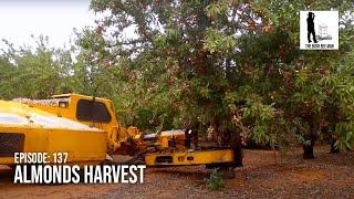 Almonds Harvest - The Bush Bee Man