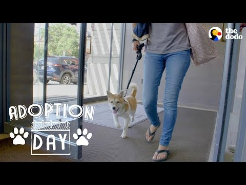 Puppy Who's Been Through So Much Loves Her New Family  | The Dodo Adoption Day