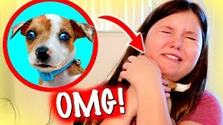 We Surprised the KIDS with a new PUPPY! | The CUTEST PUPPY in the World!