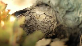 preview picture of video 'Bodegas Luis Cañas El sabor del tiempo.wmv'