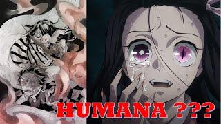 Muzan Kibutsuji  - (Demon Slayer: Kimetsu no Yaiba) - NEZUKO se Convierte en HUMANA ???    MUZAN Intenta ESCAPAR     Review 195 Kimetsu no Yaiba