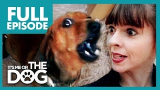 Miniature Dachshund With Big Attitude: Rufus 🌭| Full Episode | Its Me Or The Dog