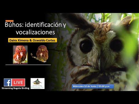 Buhos: Identificación y Vocalizaciones - Bogota Birding & Nature Colombia Tours
