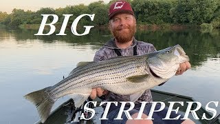 Giant Stripers on the Savannah River
