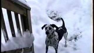 Dumb Dog