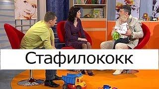 Смотреть онлайн Что такое стафилококк
