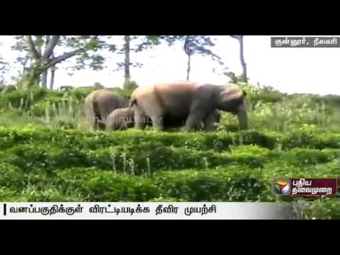 Forest-officials-efforts-at-chasing-the-wild-elephants-camping-near-coonoor-deep-into-the-forest