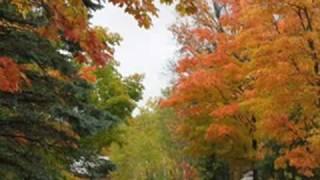 l i d ch b i h t les feuilles mortes autumn leaves. Black Bedroom Furniture Sets. Home Design Ideas
