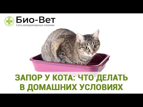 Запор у Кота / Что делать в домашних условиях / Ветклиника Био-Вет