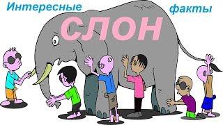 СЛОН.Символ Слон. ИНТЕРЕСНЫЕ ФАКТЫ. |ЭНЕРГИЯ ЖИЗНИ