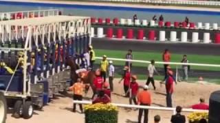 HOT: Đua ngựa KDL Dai Nam (Mùng 2 tết 2017)