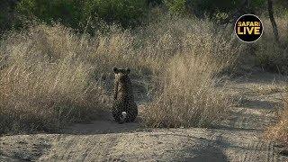 safariLIVE - Sunset Safari - May 20, 2019