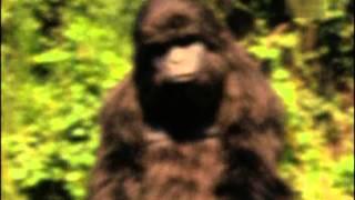 Gorilla to Sheena Morph