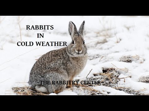 , title : 'Rabbits In Cold Weather