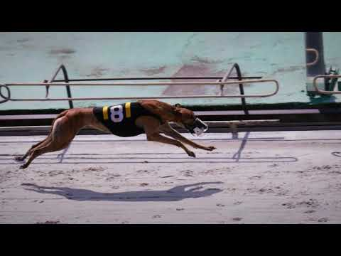 Palm Beach 2019 Gallagher/Kinnaird Puppy Stakes