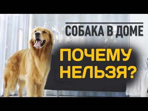 Собаке нельзя жить в доме, почему? Священник Максим Каскун