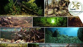 Biotope Aquarium Design Contest 2018